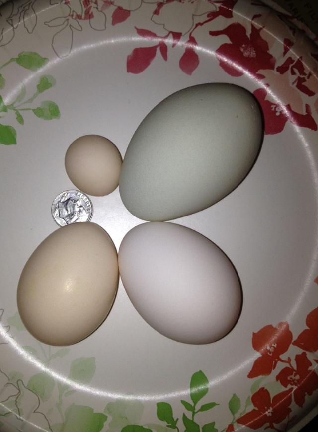 """Extra Jumbo  Green egg vs ultra mini """"fart"""" egg"""