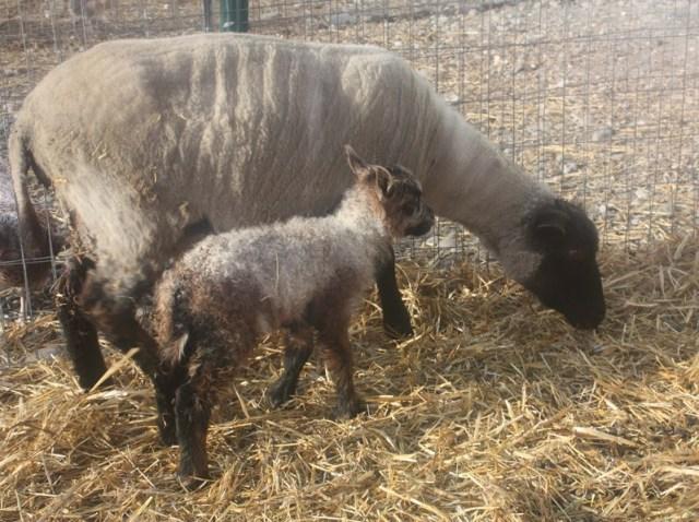 Betty has a new little girl