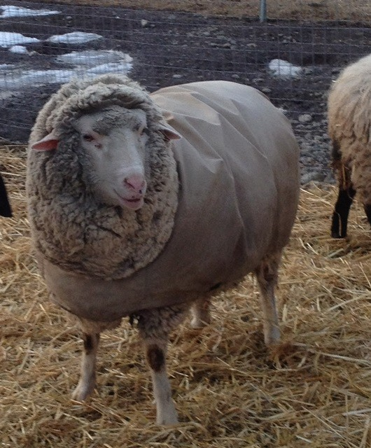Do you think this coat makes me look fat? this