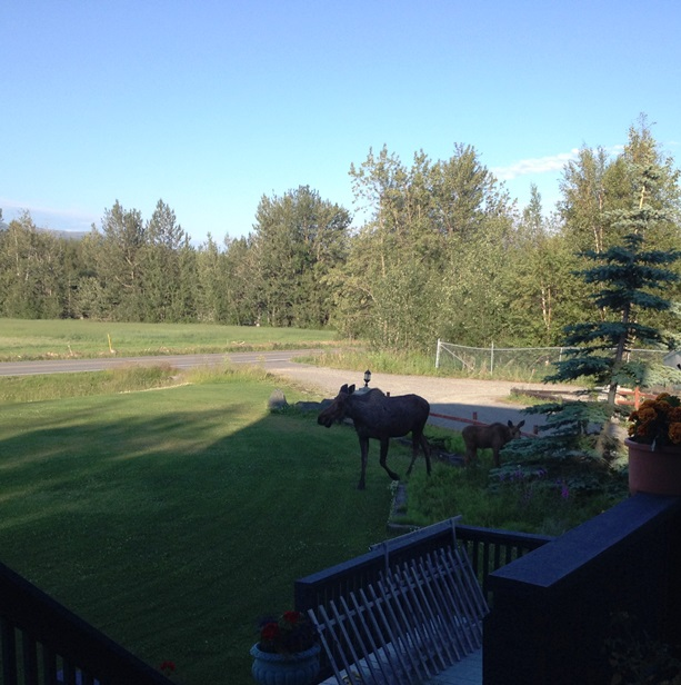 Moose are weeding for me.