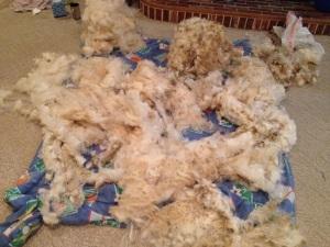 Woolley Nelson's 2014 fleece